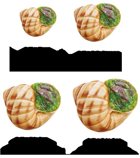 Une image de différentes calibres d'escargots